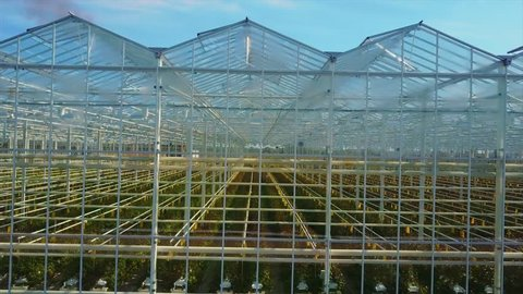 Aerial Video of Greenhouses  Roses Stock Footage Video (100