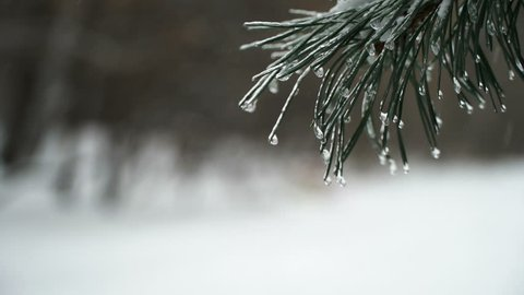 Icicle For Christmas Trees.Christmas Tree Against Background Natural Stock Footage