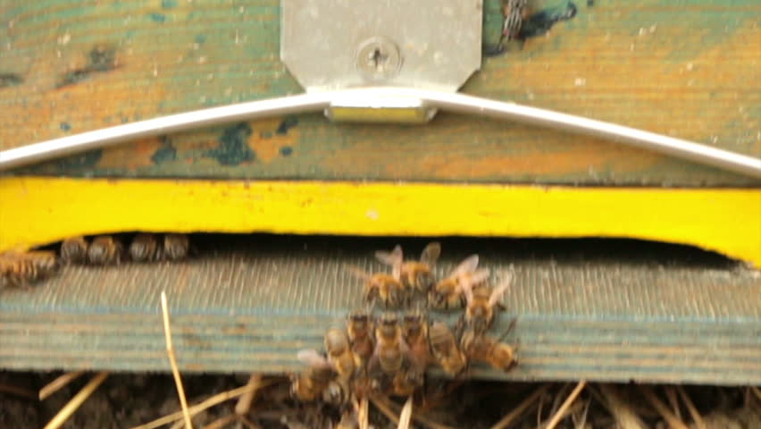 Header of apiculture