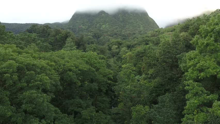 Aerial view of mountains in mist and cloud, tropical green plants and jungle rainforest with waterfall Fonds-Saint-Denis Martinique,France