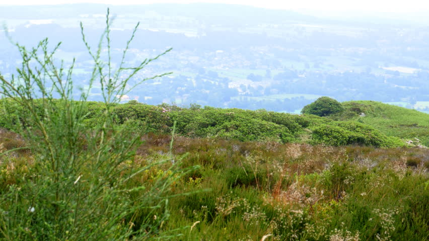 Stanton Moor - picturesque upland habitat with heather, rhododendrons and wind-eroded rocky pillars. Derbyshire, Peak District, England.