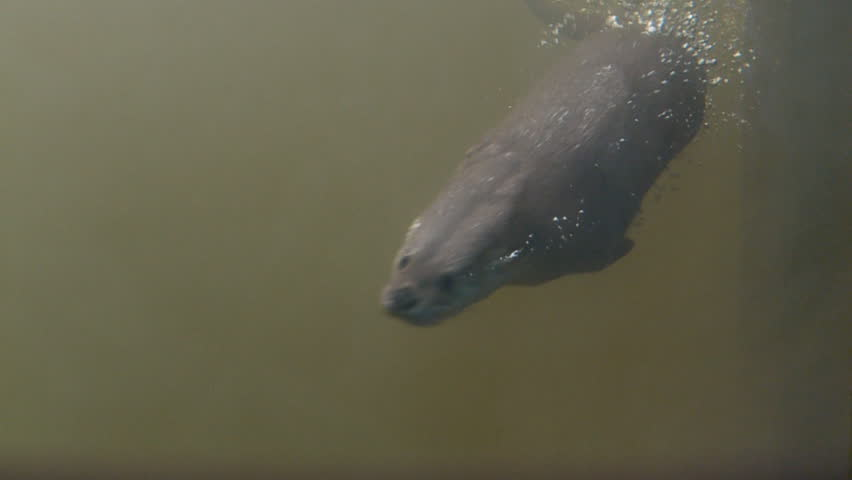 Header of Otter
