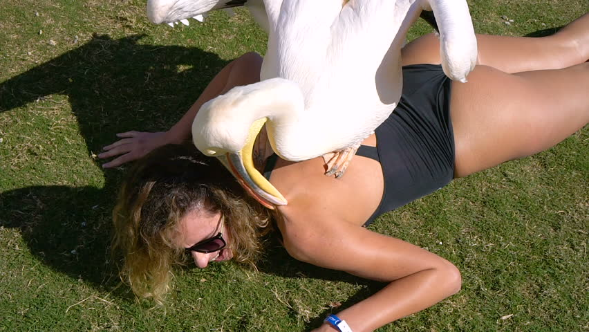 Pelican massages a young beautiful girl on the beach