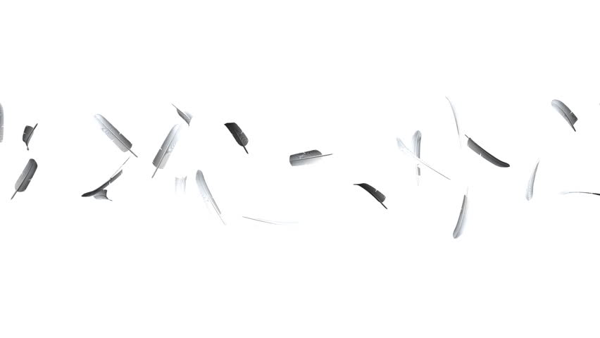 White Feathers On White Background. Loop able 3DCG render Animation. #33584773
