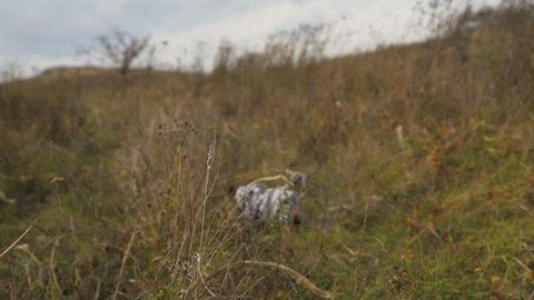 Portrait of a little dog. 4K.
