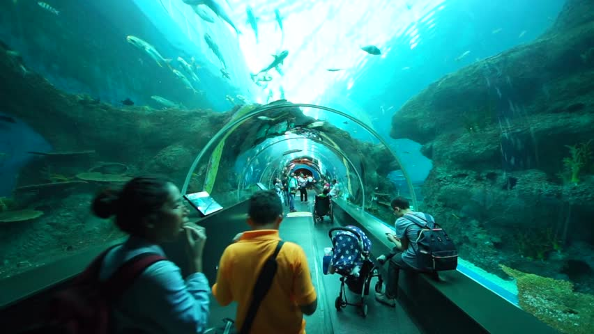 Underwater Sea Tunnel With Fish And Marine Life Stock ...