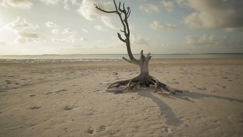 Harbour Island Lone Tree (2 shots)