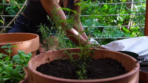 Young native woman's hands gently scooping rich dark potting soil into a red clay pot, with freshly potted plants in the foreground as she does her gardening. Lush rainy tropical foliage background.
