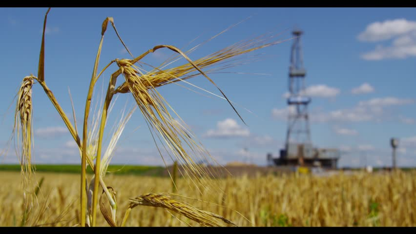 Close up rye on a field with drilling rig on a background; Shot on RED digital camera