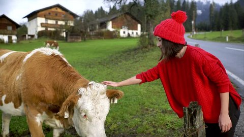 A pretty girl playing with a cow standing field