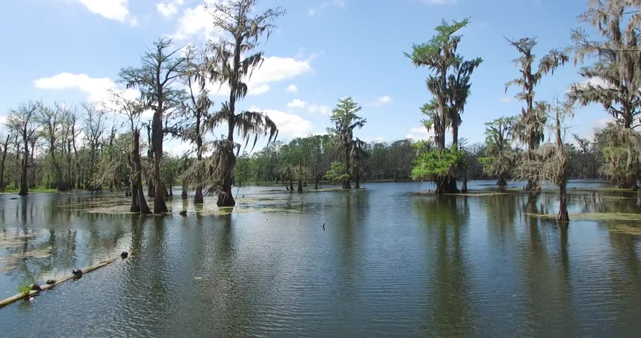 Beautiful drone aerial video flying into the Louisiana swamp bayou filming alligators, birds, trees, boats etc | Shutterstock HD Video #33938683