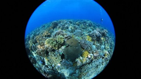 Circular Fisheye View of Coral Reef at Apo Island, Dumaguete, Philippines