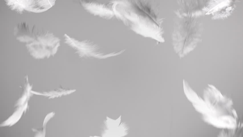 White feathers flying in the wind and falling down clean background