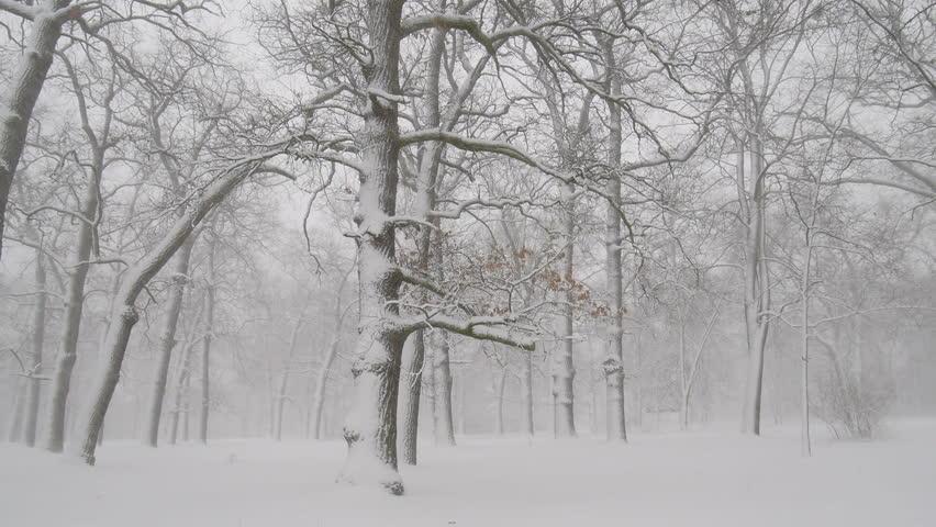 Winter in the forest.  | Shutterstock HD Video #34017793