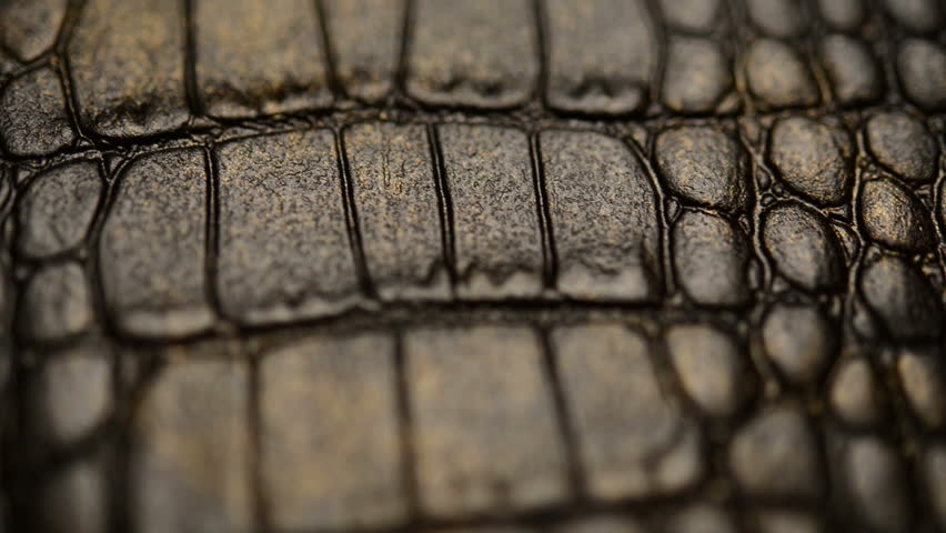 Crocodile skin, macro. Dolly shot