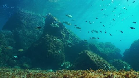 Underwater seascape, rocks on the seabed with shoal of fishes in the Mediterranean sea, natural light, Cote d'Azur, France, 60fps