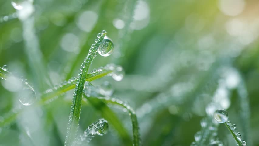 Macro of raindrop. Composition of nature. | Shutterstock HD Video #34528723