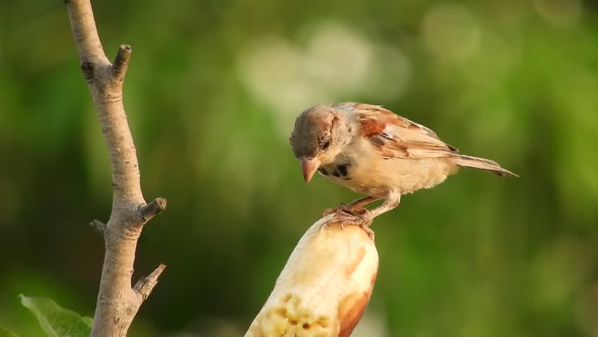 Header of sparrow