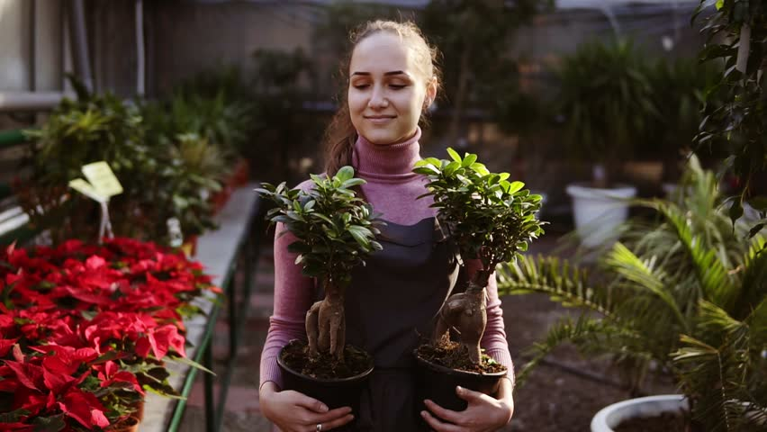 Young female florist with ponytail in apron walking among rows of flowers in flower shop or greenhouse while holding two pots with plants. She is arranging these pots on the shelf with other plants