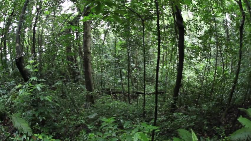 Palau's tropical forests contain a diverse array of vegetation.  The islands are
