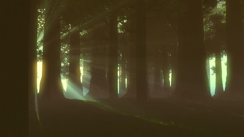 Supernatural Forest Lightrays