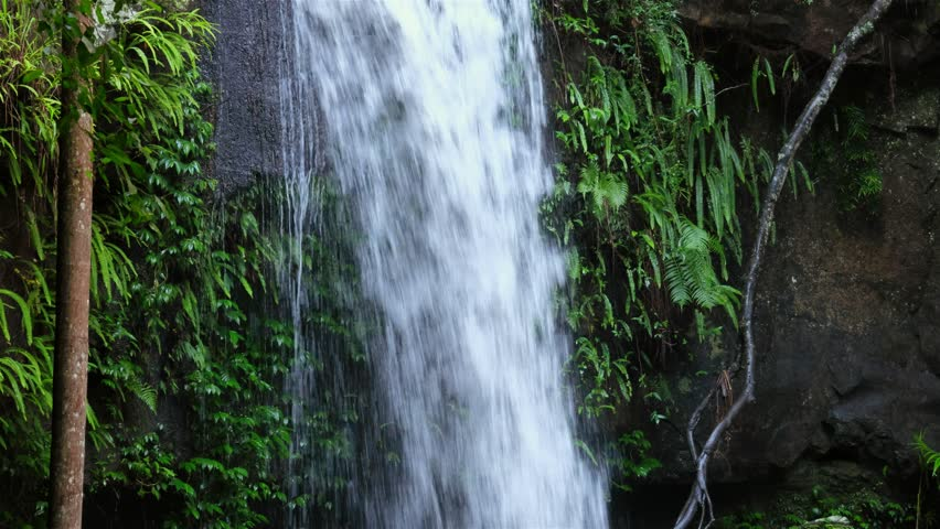 Curtis Falls, a popular short rainforest walk on the Gold Coast Hinterland in Mt Tamborine.
