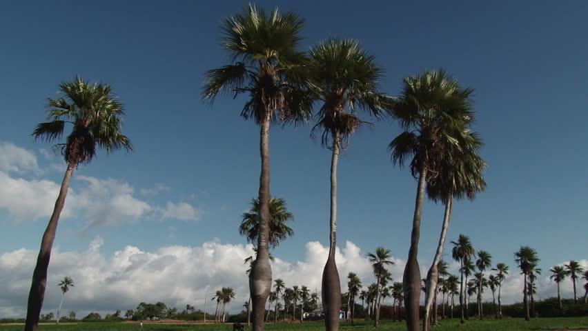 Vinales Tobacco Plantation in Pinar del Rio province, western Cuba | Shutterstock HD Video #3490223