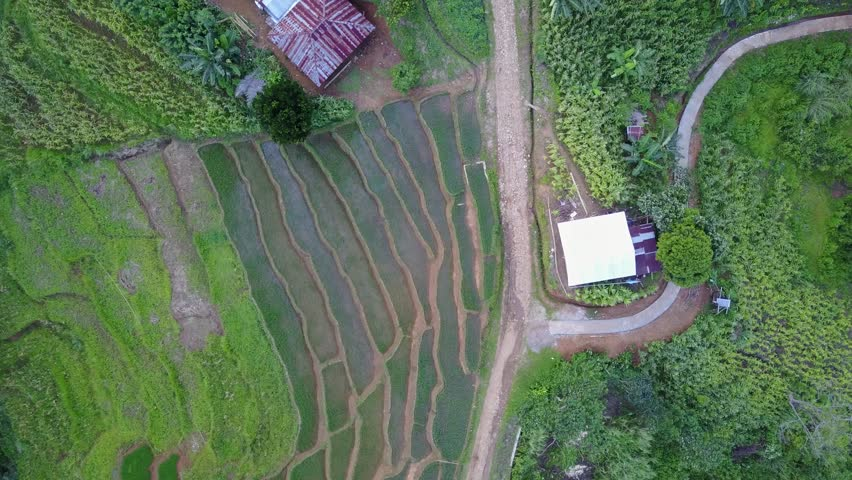 Drone shot top view ascent aerial jungle mountain village buildings rice fields footpath in Flores / Drone shot top view ascent aerial jungle mountain village buildings rice fields footpath in Flores