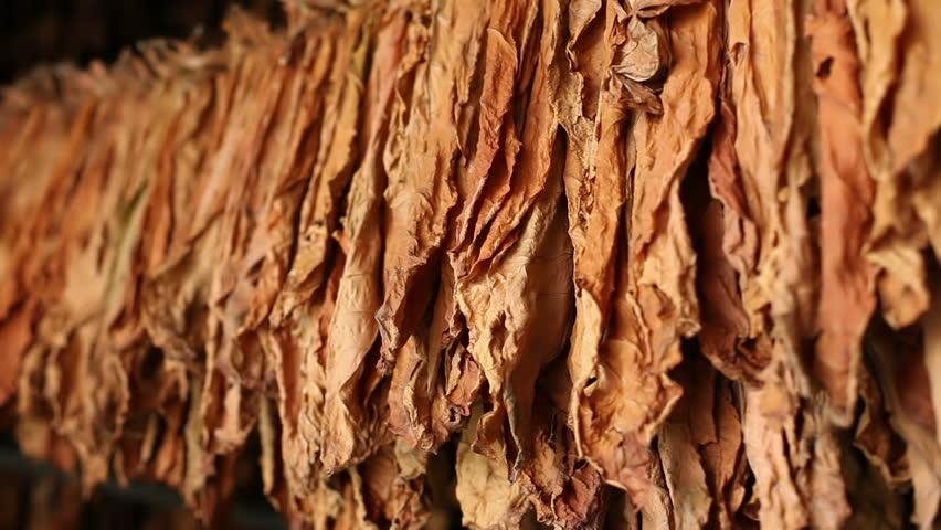 Drying tobacco