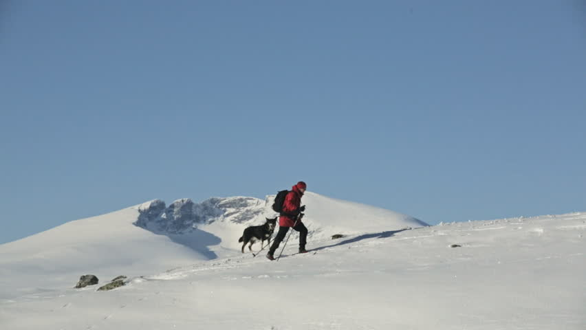 Woman and Dog mountain skiing | Shutterstock HD Video #3493703