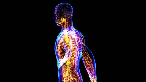 All human body systems. Transition body - lymphatic system - body. Loop