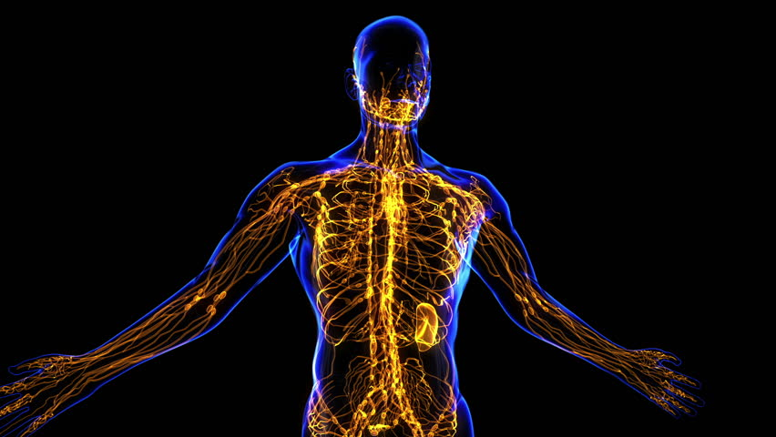 All Human Body Systems  Lymphatic System Highlight  Loop Stock Footage Video 3494597