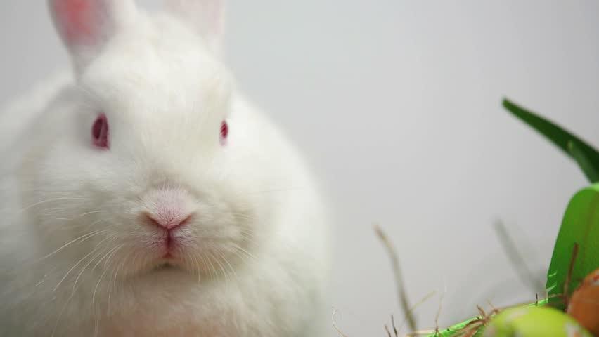 bunny rabbit sniffing around - photo #21