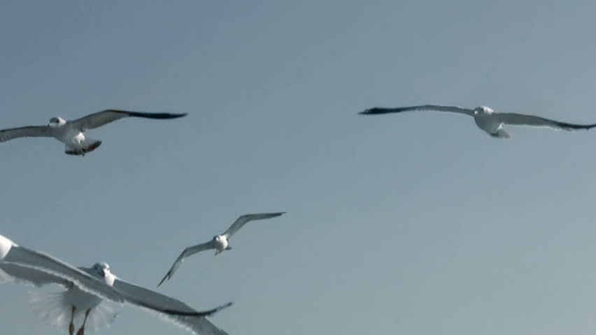 Blue sky. A lot of seagulls flying. Close-up
