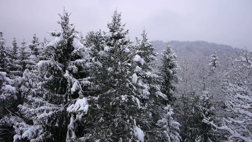 AERIAL: Falling snowflakes in forest