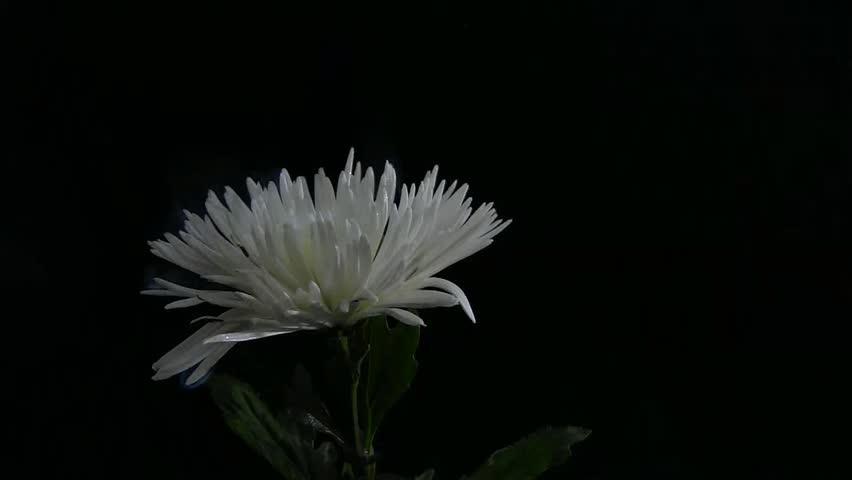 Flaming Flora | Shutterstock HD Video #3614183