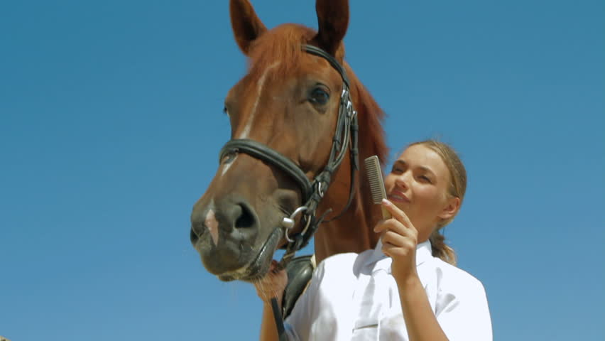 Trainer is brushing horse. | Shutterstock HD Video #3639743