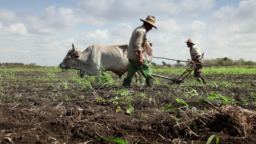 GUINES, CUBA - CIRCA APRIL 2013: Beginning of the growing season, peasants working in farm sowing and plowing the ground, circa April 2013 in Guines, Cuba