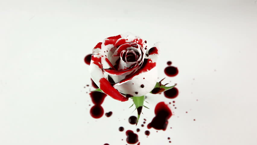 Stock Video Clip of Isolated Dripping Blood on White Rose | Shutterstock