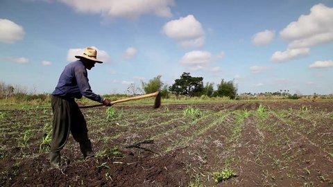 GUINES, CUBA - CIRCA APRIL 2013: Beginning of the growing season, Cuban farmer at work in the field, peasant using hoe in farm, circa April 2013 in Guines, Cuba