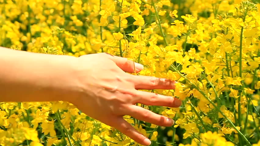 Woman's Hand Caressing Grass Summer Concept Slow Motion Background HD