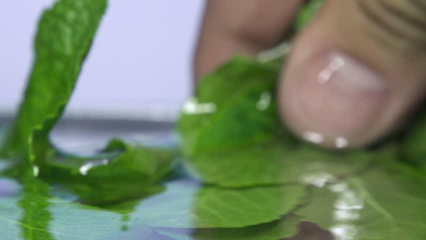 Fresh mint falls under water with a splash.