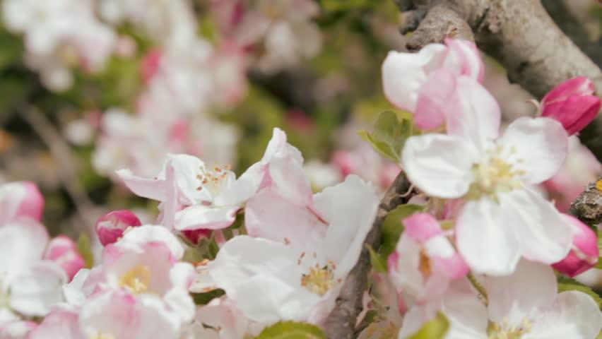 Blur Tag wallpapers: Plant Blur Sun Macro Tree Bokeh Trees Winter ...