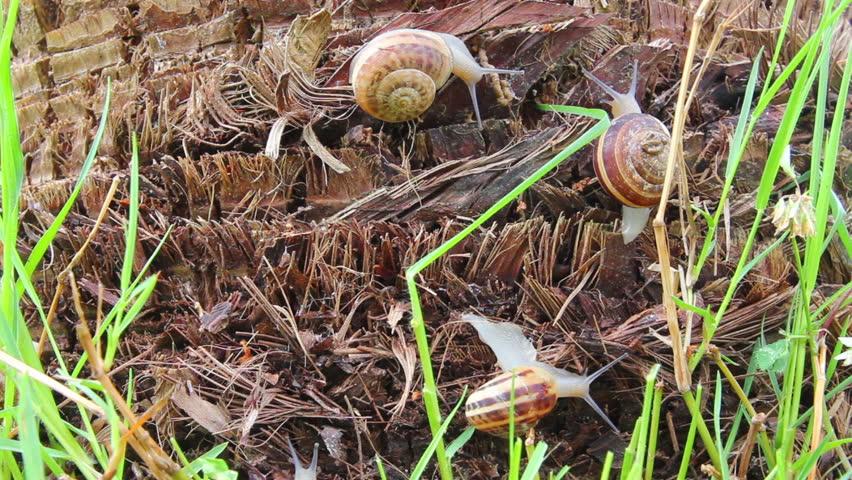 snails in grass - timelapse