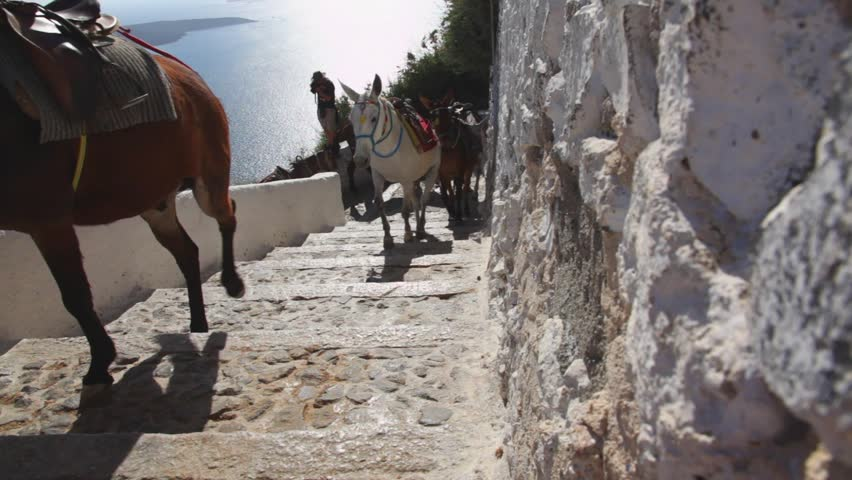 Greece santorini island, donkeys walking and climbing steps. Donkeys are used to transporting tourists from sea to the capitol #4005346