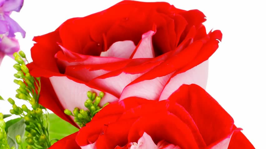 Flowers Bouquet Of Rose And Pansy With Green Grass 1920x1080 Intro Motion Slow Hidef