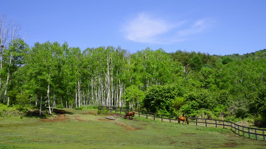 and horse ranch hd stock video clip - Bamboo Garden 2016