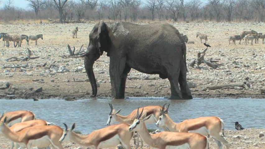 Bull Elephant splashing in waterhole during the dry season in Etosha National Park, Namibia, Africa