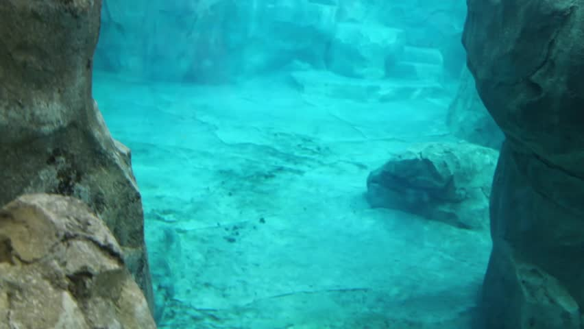 A toddler watching a seal in an aquarium at a zoo