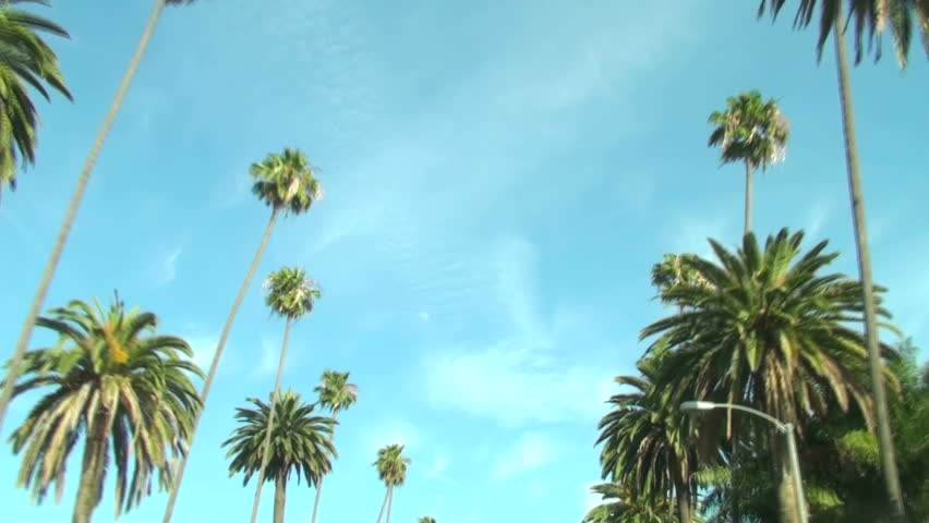 Palm Trees on Beverly Drive | Shutterstock HD Video #432172